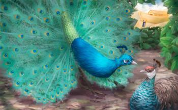 Peacocks, cover illustration