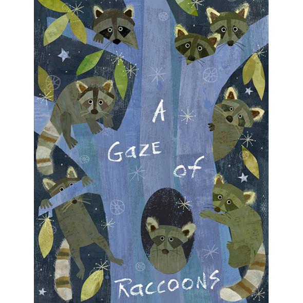 A Gaze of Raccoons