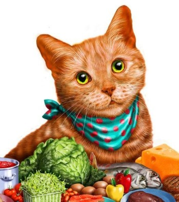 Orange cat with food