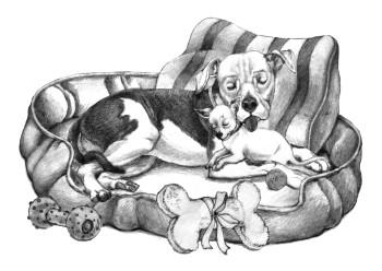 A Rescue Cuddle