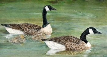 a family of canadian goose