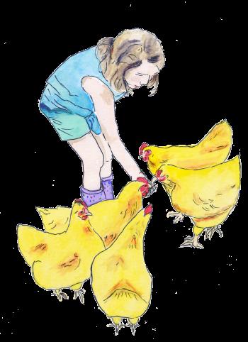 feeding chickens 2