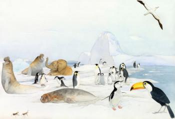 Antarctica - Funny Animal Atlas