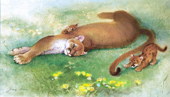 Puma and Cubs