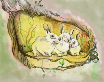 The rabbit family