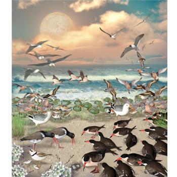 seashore birds