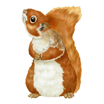 Knester, the red squirrel.