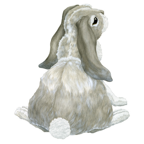 Oz, the bunny.