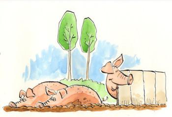 Zippy the Pig