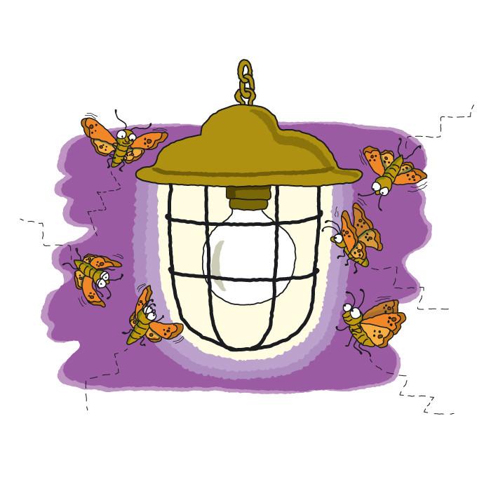 Moths Around a Light