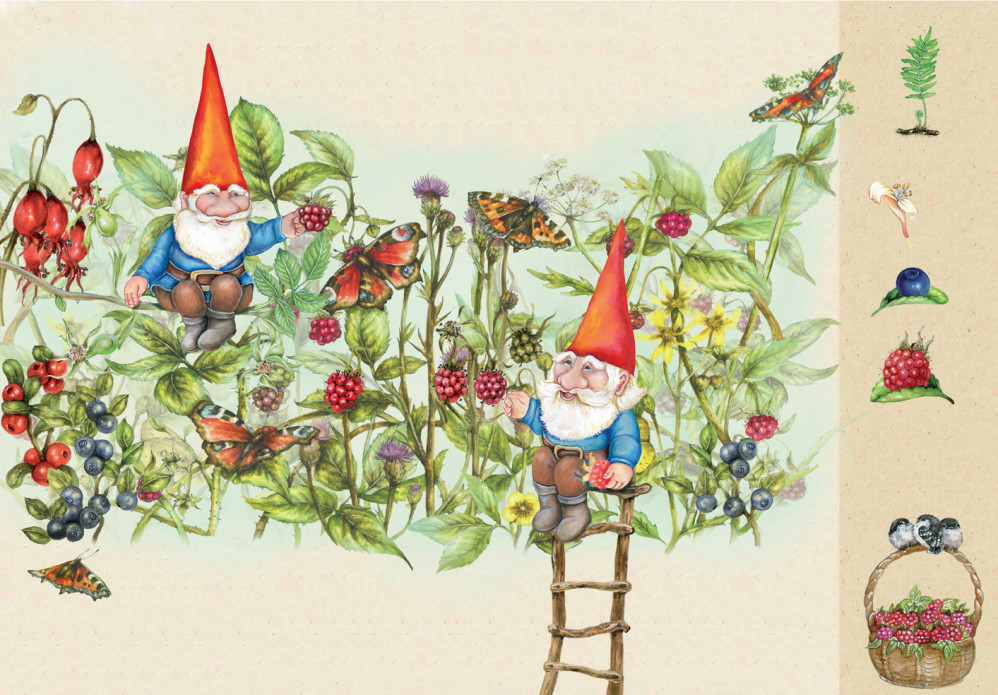 life of the gnomes