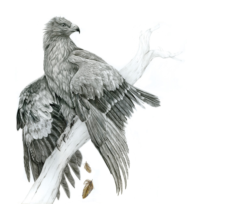 Wildlife art Award
