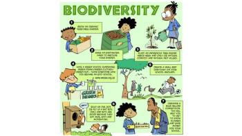 Eco Warriors at School