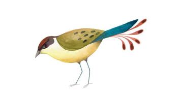 Bird exhibition