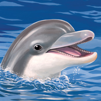 Do Dolphins Really Smile
