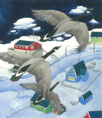 Greenland geese. Detail.