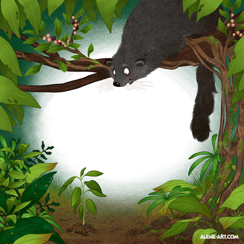 Binturong poop and the strangler fig