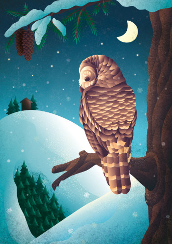 Silent Night, Owl