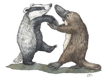 Badger and Platypus