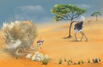Mother Ostrich finds a unusual egg