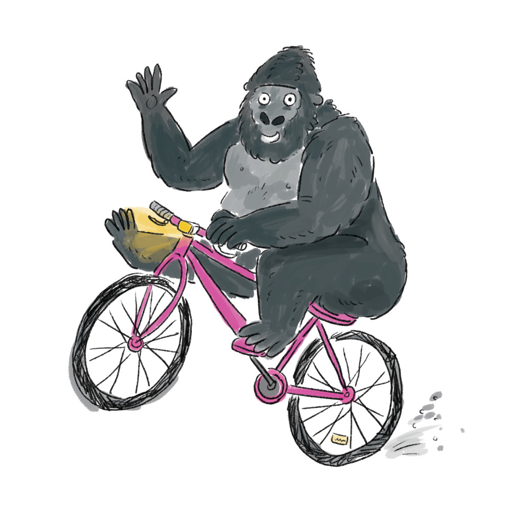 Gorilla on a bicycle
