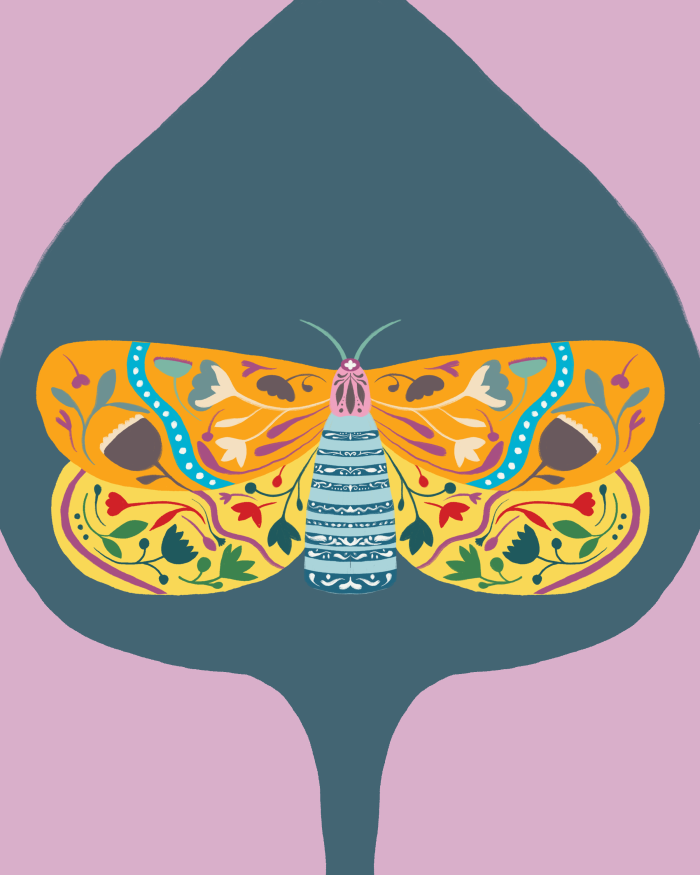A decorated moth