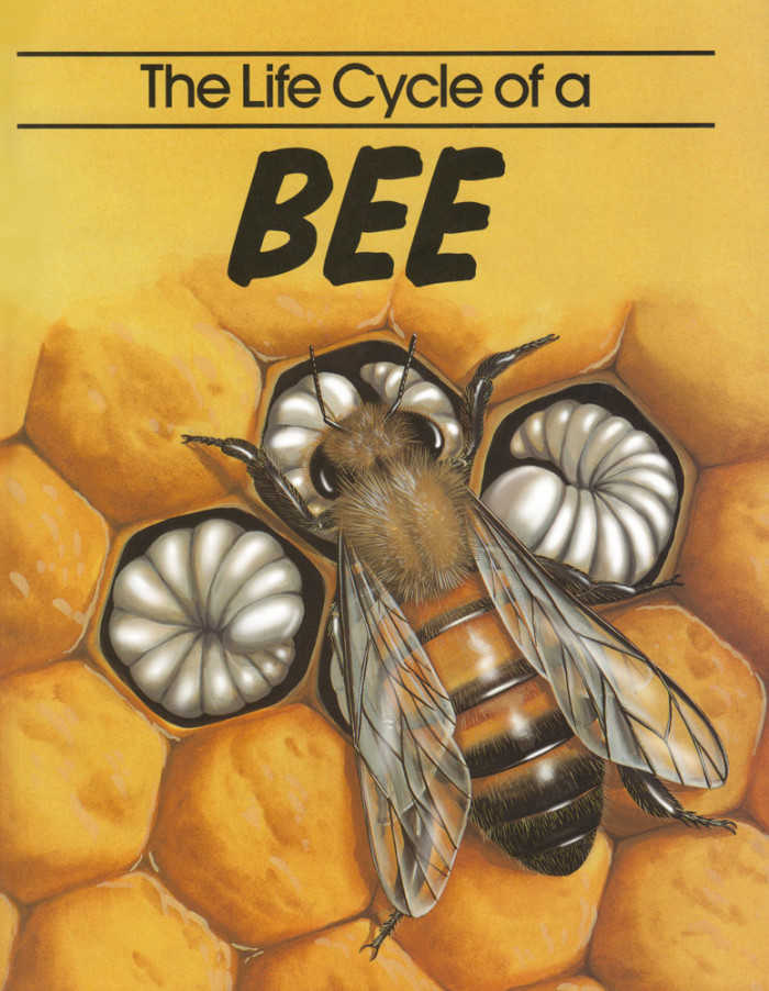The Life-cycle of a Bee - Wayland