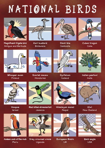 "National Birds - from ""Eco Kids Planet"""