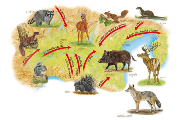 Map of Po valley with new species of animals: hedgehog, deer, marten, hedgehog, deer, marten, roe deer, raccoon
