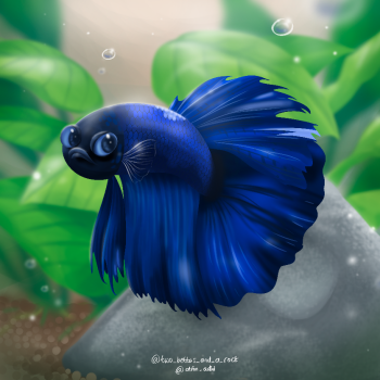 A Betta named Sushi