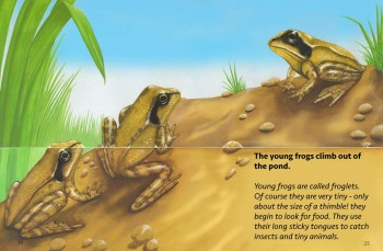 The Life-cycle of a Frog - Wayland