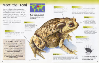 Animal Neighbours - TOAD (Hodder/Wayland) - 16 book series