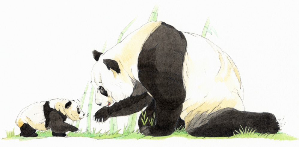 Mommy Panda and her cub