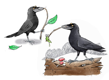 Clever Crows